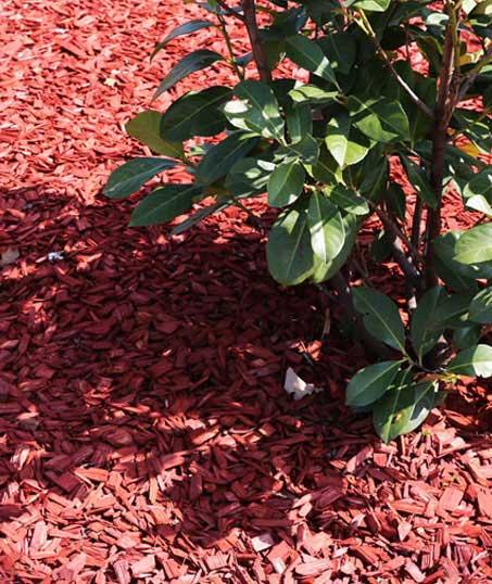 True Vine Landscape Management, Inc. Mulching