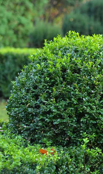 True Vine Landscape Management, Inc. Shrubs & Hedges