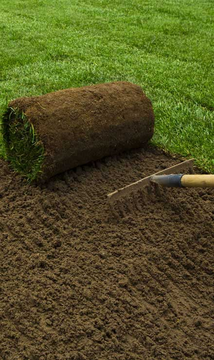 True Vine Landscape Management, Inc. Sod Installation