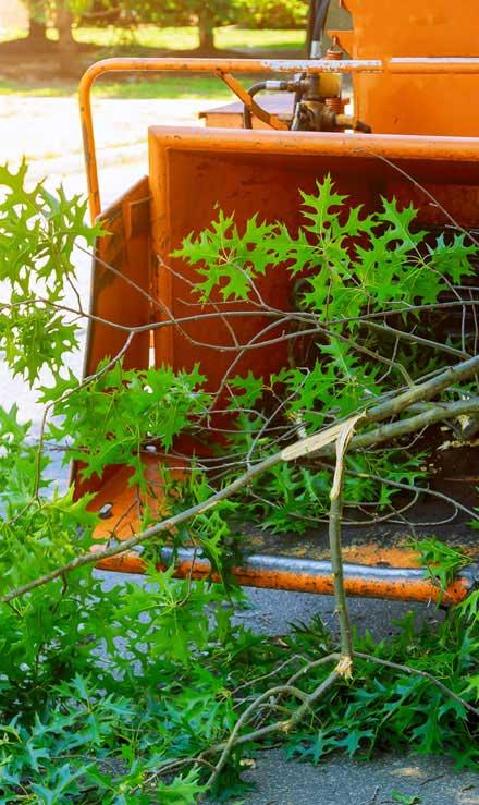 True Vine Landscape Management, Inc. Tree Trimming