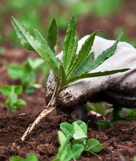 True Vine Landscape Management, Inc. Weed Control services